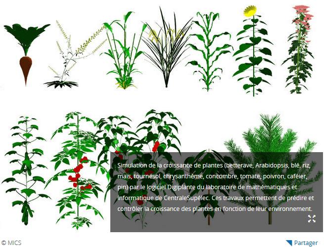Article CNRS : L'agriculture croît dans les mathématiques