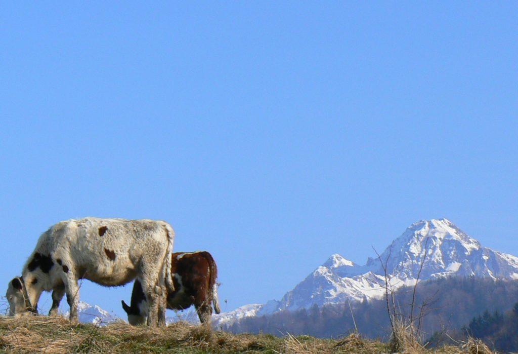 Aide à la planification de la production pour un groupement d'éleveurs bovins