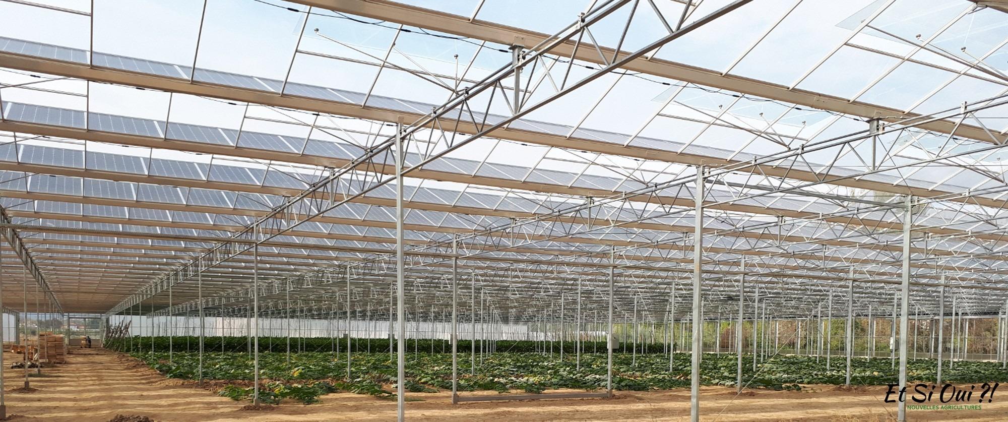 L'agrivoltaique, un outil pour l'agriculture  périurbaine